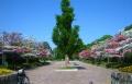 山崎公園①