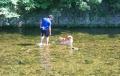 犬も川遊び
