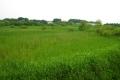 デッキから見る湿地帯