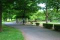 芝生と遊歩道