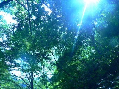くろくまの滝周辺②