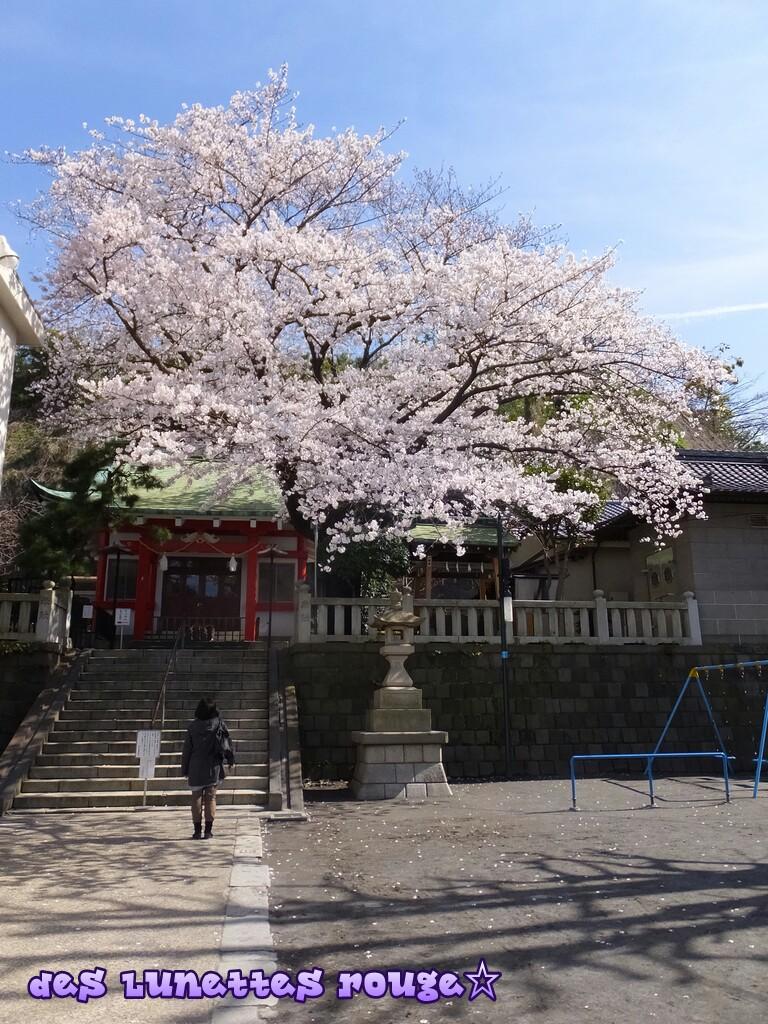 桜:嚴嶋神社