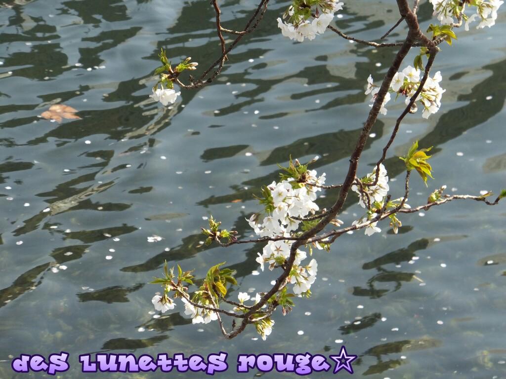 桜:汽車道