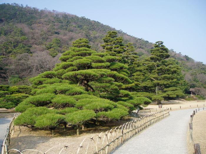 高松・栗林公園 鶴亀松とお手植松