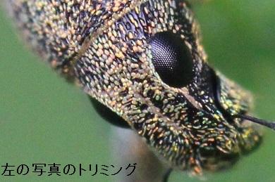 IMG_2687トリ
