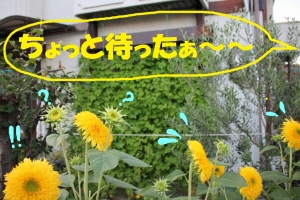 IMG_9776.jpg