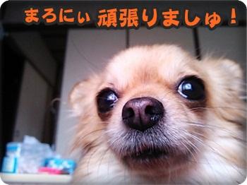 まろにぃ横DSC_0337