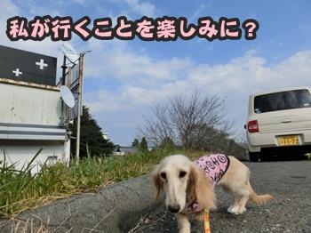 ぴあの&譲渡会099