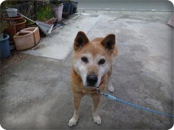 るぅ旅立ち&迷い犬138