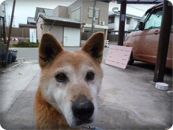 るぅ旅立ち&迷い犬136