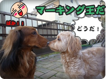 サラと新入生063