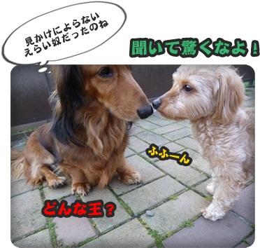 サラと新入生064