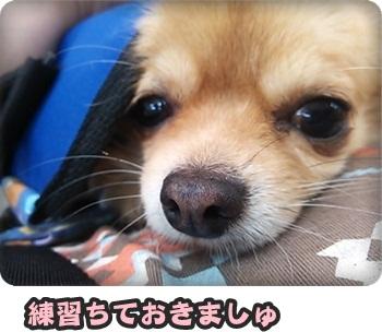 変身まろにぃ横DSC_0248