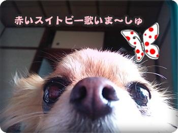 変身まろにぃ横DSC_0409