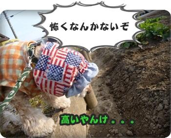 るぅ旅立ち&迷い犬071