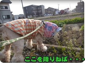 るぅ旅立ち&迷い犬067