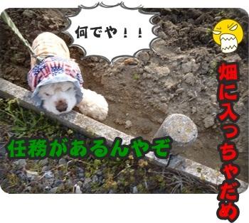 るぅ旅立ち&迷い犬073