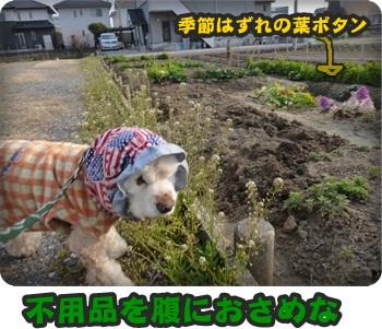 るぅ旅立ち&迷い犬076