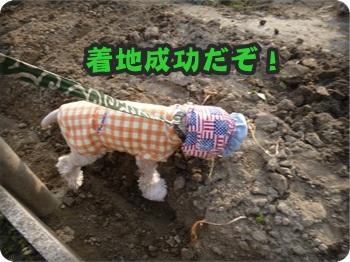 るぅ旅立ち&迷い犬072