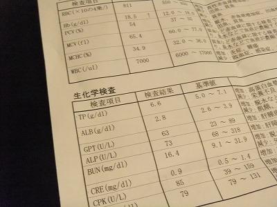 DSCF1056.jpg