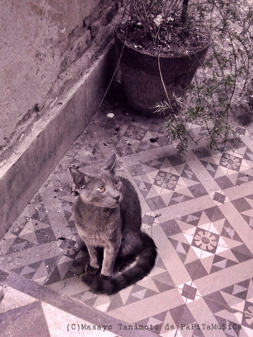 solo gato