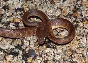 snake_20140305234805d81.jpg