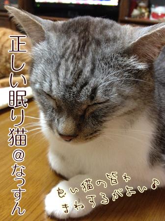 眠り猫なっすん