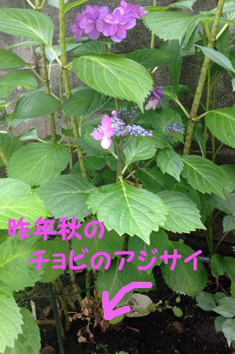 20140701_5.jpg
