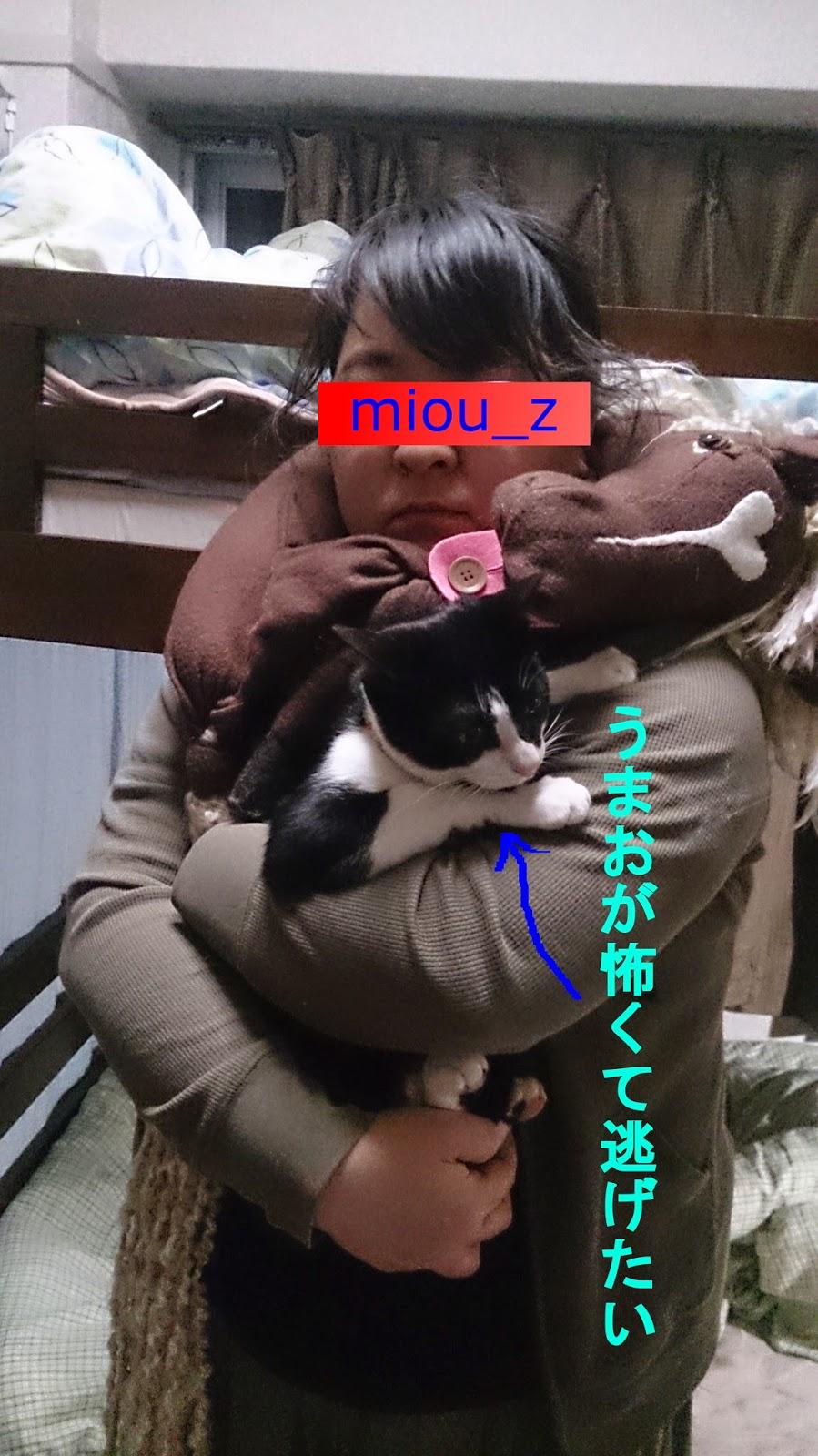 miau_zumao3_20140607061613bde.jpg