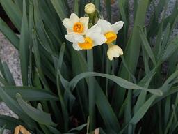 田舎の春3