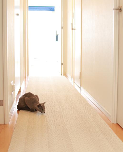 廊下で狙う