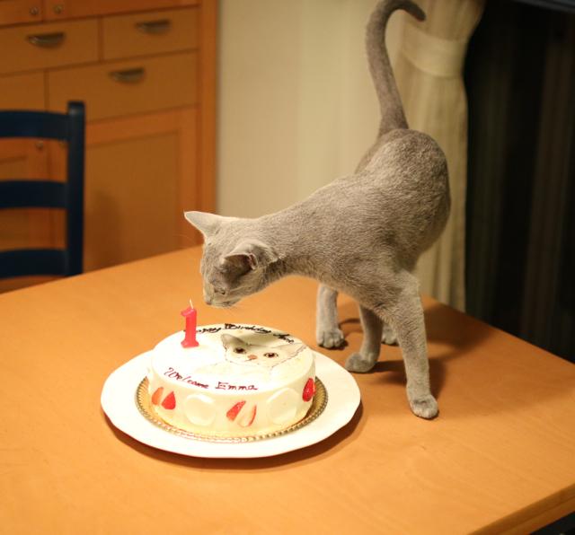 ケーキとアン