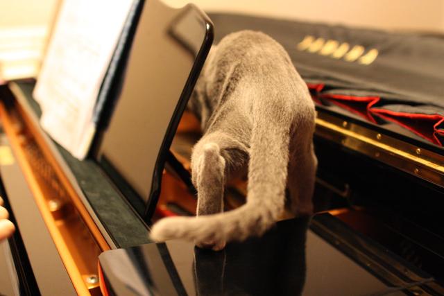 ピアノ歩く