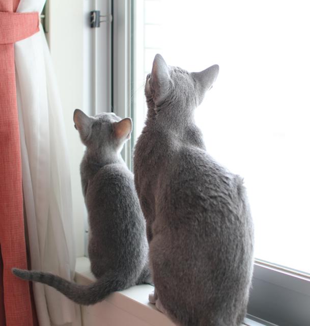 アンとエマ窓辺