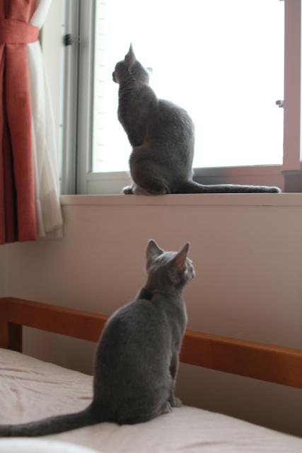 アンとエマ窓辺2