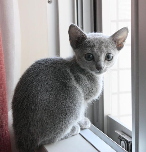 チビアン窓辺