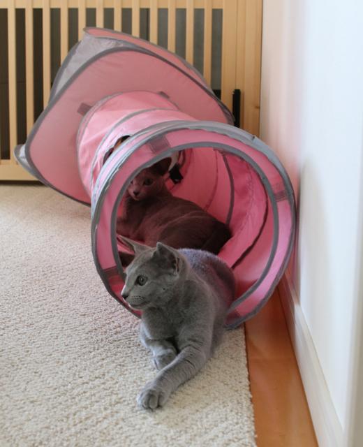アンエマトンネル