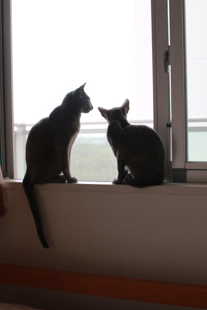 窓辺 アンエマ