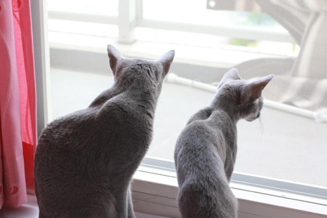 窓辺でふたり