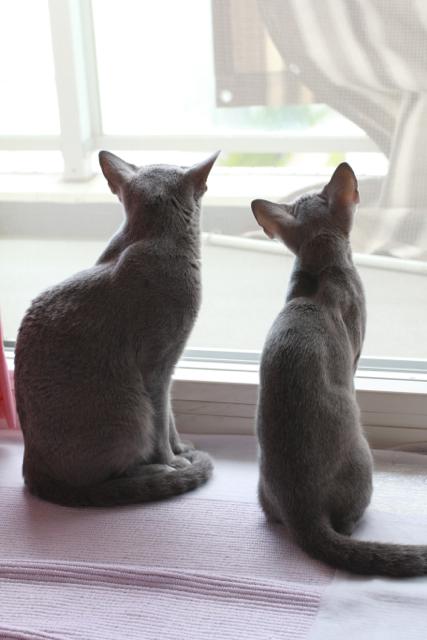 窓辺でお座り