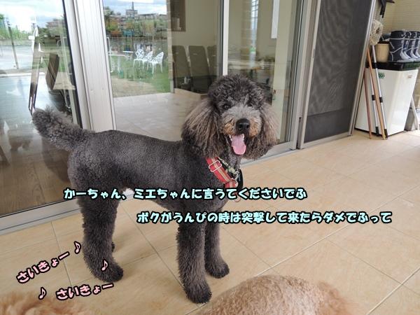 DSCN495020140712a.jpg