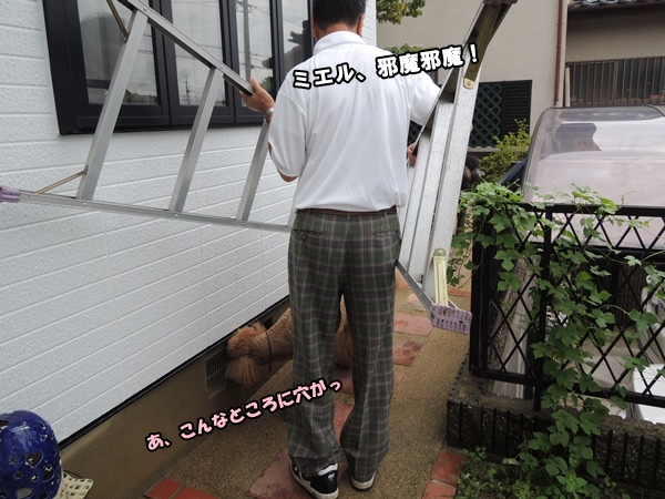 DSCN599120140809a.jpg