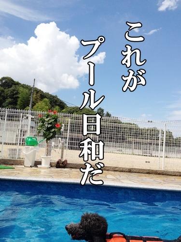 IMG_602120140808.jpg