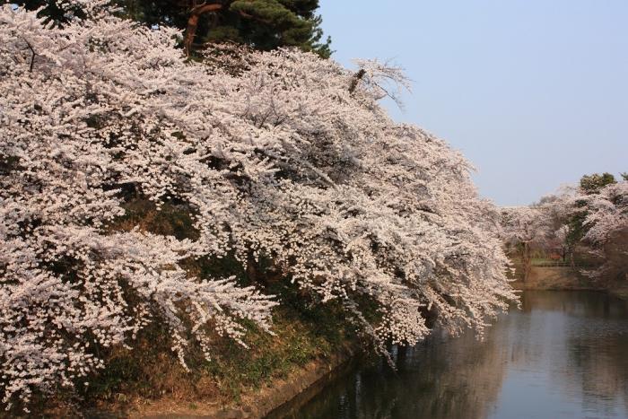 20140426弘前公園内堀