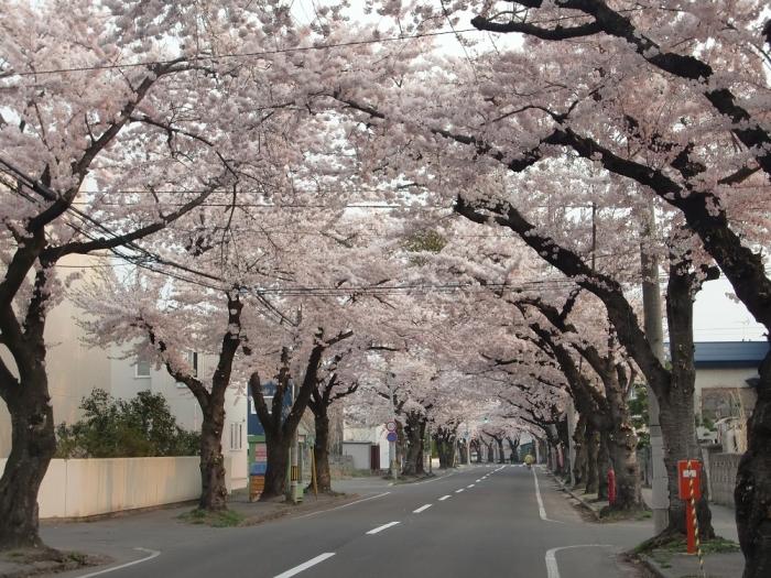 20140427桜川1