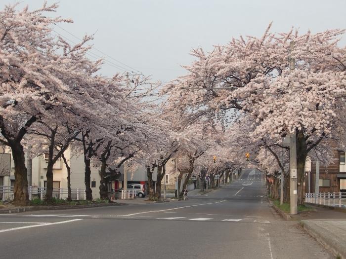 20140527桜川1-2