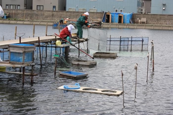 20140524シロウオ漁4