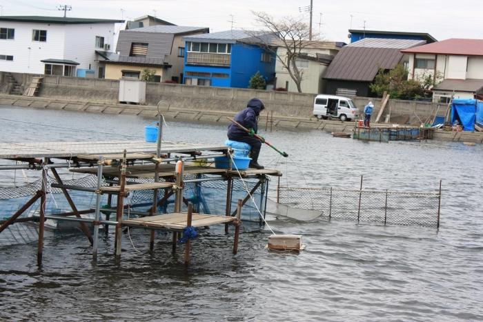 20140524シロウオ漁3