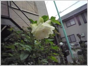 s_garden2014_1.jpg
