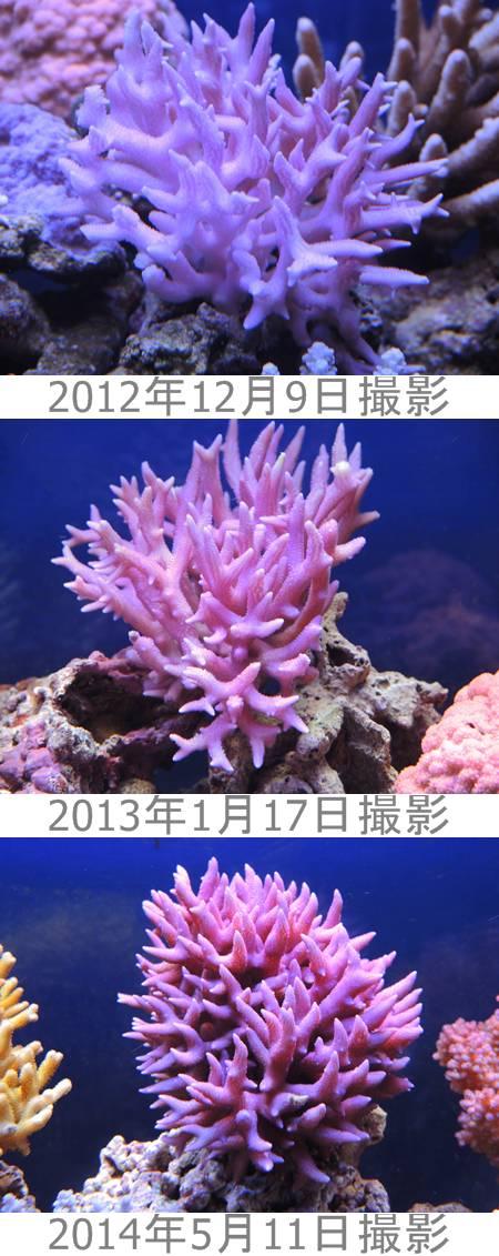 2014-5-11ビフォ-アフタ-画像
